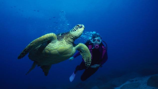 Diver swimming alongside giant green sea turtle in Hawaii