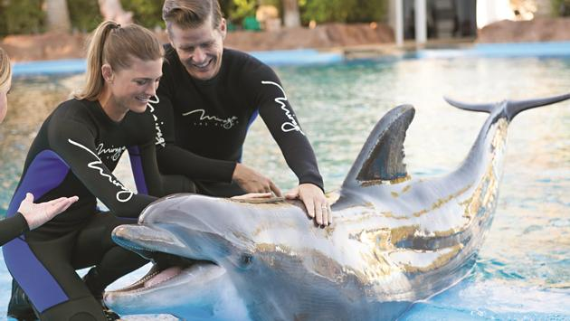 The Mirage Dolphin Trainer Experience