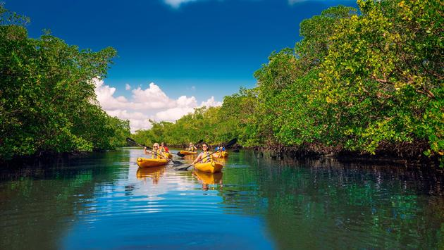 Vacationers kayaking in Lee County, Florida
