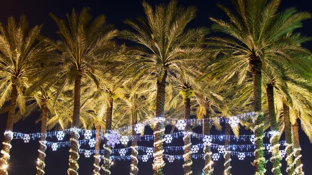 Palm trees decorated with holiday lights in Tampa, Florida