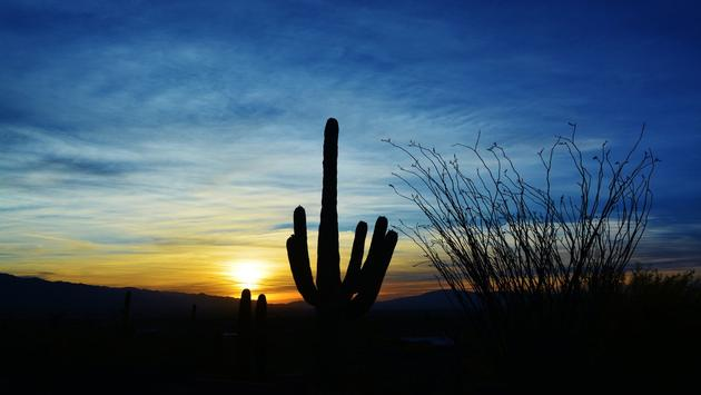 The Saguaro cactus, grown only in the Tucson area, has become the symbol of the Southwest.