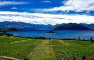 New Zealand is known for its sweeping, romantic vineyards.