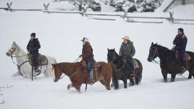horses, snow, ranch, western