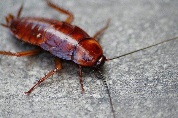 The Airport Doesn't Want Your Roaches