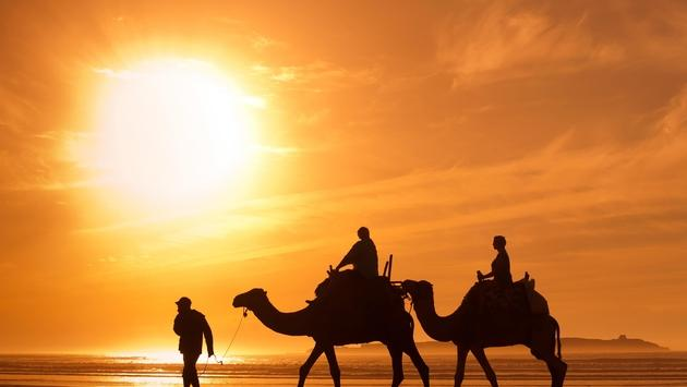 Tourists riding camels in Morocco