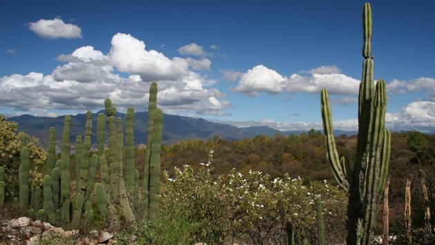 View of the countryside in Oaxaca, Mexico