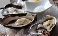 Oysters in New Zealand