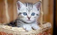 Adorable kitten in a basket