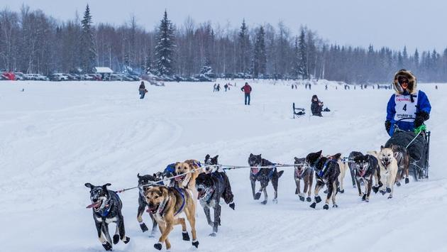A musher and sled dogs during the Iditarod