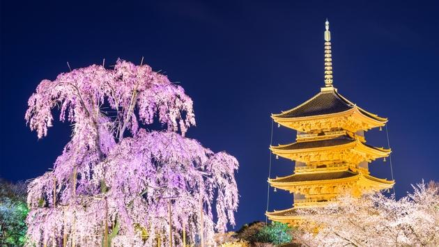 Cherry blossoms surround Kyoto's Toji Temple.