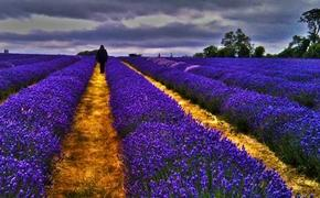 Surrey Lavender Farm, United Kingdom