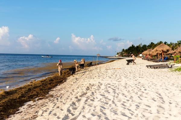 Quintana Roo Expected to Be Spared by Sargassum Seaweed This August