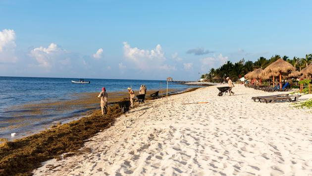 Mexico Hotels Transferring Guests to Sargassum-Free Beaches
