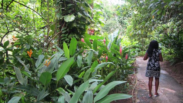 Saint Lucia's Diamond Botanical Gardens