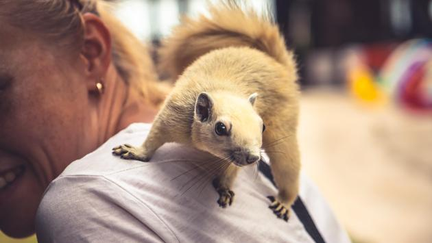 A squirrel playing on a woman's shoulder