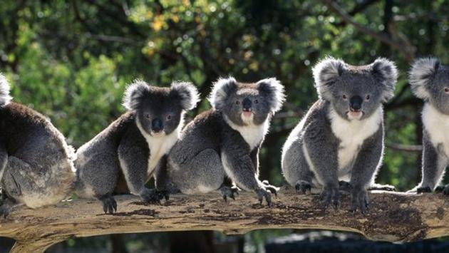 Australia – A Family Adventure