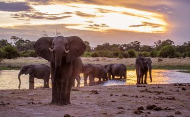 Khwai elephants