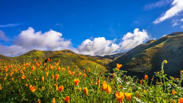 Super Bloom, mountains, flowers