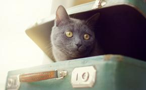 cat, suitcase, travel