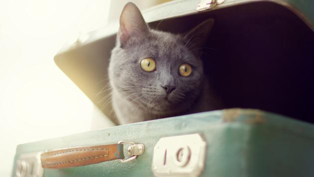 cat, suitcase, travel