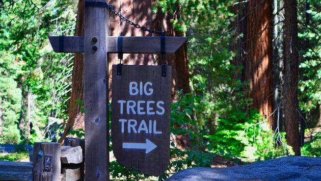 Big Trees Trail Sign