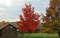 Leaf colors in Ashville