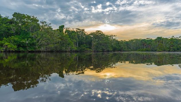 Amazon Rainforest Sunset Reflection