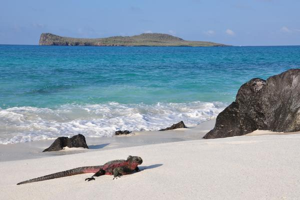 Galapagos Officials and Tour Operators Step Up Efforts to Combat Overtourism