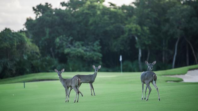 Club de Golf Riviera Maya