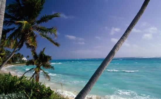 Palm trees on a beach, Hope Town, Abaco Islands, Bahamas