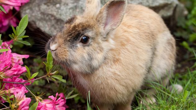 rabbit, bunny, travel