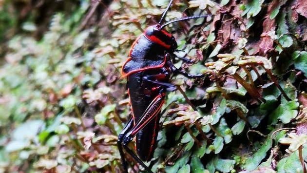 Insecte Rios Tropicales