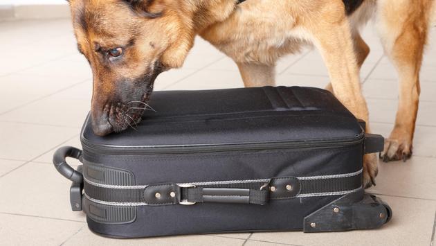 Airport dog sniff, police dog, tsa