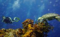 Underwater in Cozumel, Mexico