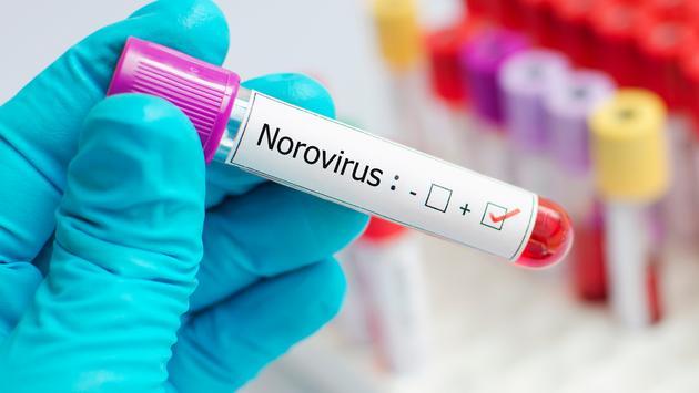 Norovirus, cruise, travel