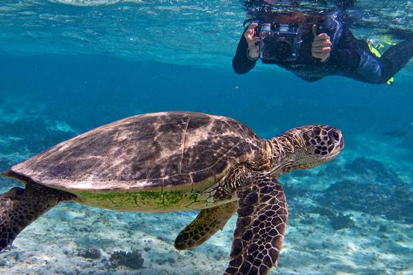 Celebrate Sea Turtle Hatching Season in Tahiti