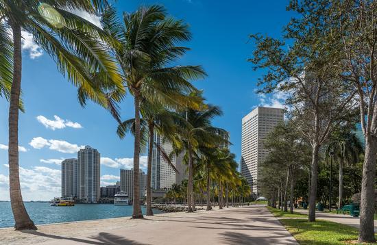 Peaceful promenade in Miami's Bayfront Park