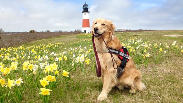 Otto, a service canine