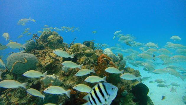 Fish shoaling over the the Blue Hole, Exuma Cays, Bahamas