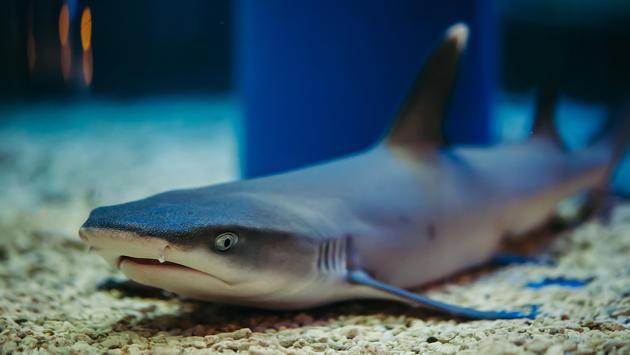 A shark in an aquarium