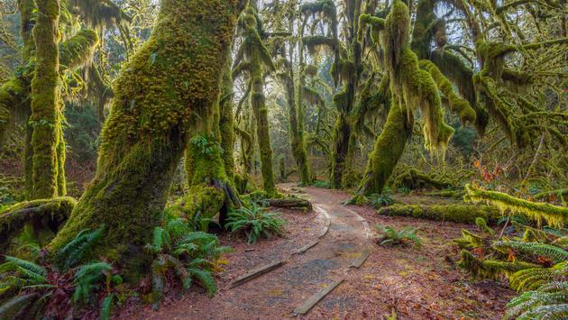 The Hoh Rainforest in Washington's Olympic National Park