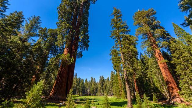 Sequoia National Park, Califórnia