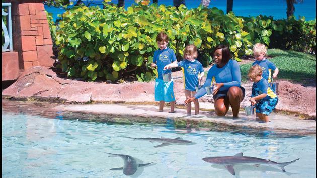 Sea squirts Atlantis, Nassau Paradise Island, Bahamas