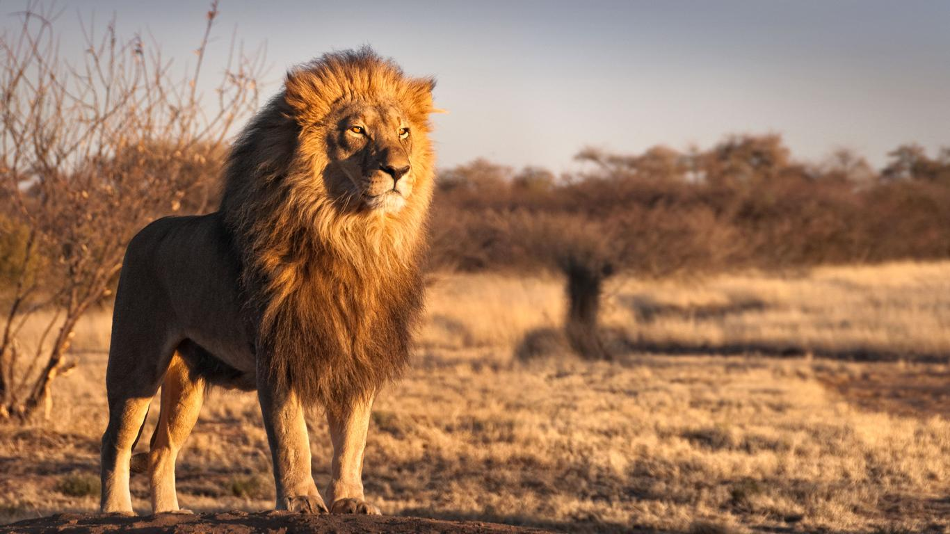 Lion King-Inspired Trips to Kenya and Tanzania