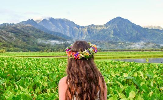 Taro Fields, Kauai