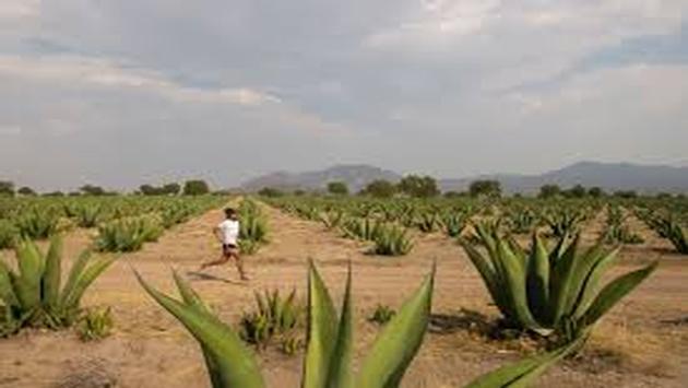 """Carrera para conmemorar la """"Ruta del Pescado de Moctezuma"""