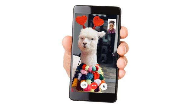 Alpacas, facetime, camera, video, cell phone