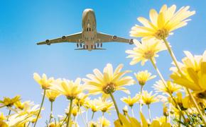 flowers, planes, airport