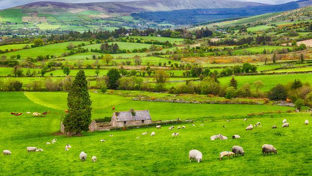 The charming Irish countryside.