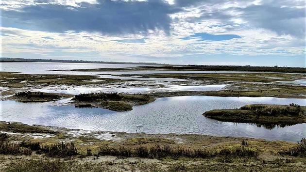 Bolsa Chica Ecological Reserve